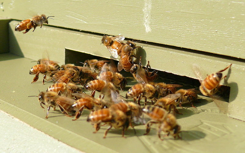 Busy Bee Hive