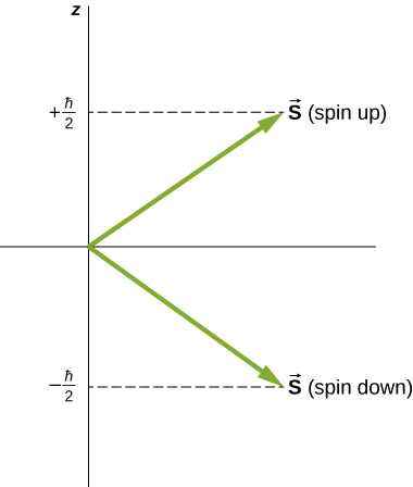 The two possible spin states of the electron are illustrated as vectors of equal length, one pointing up and right, representing vector S spin up, and the other pointing down and right, representing spin down. The two vectors are at the same angle to the horizontal. Spin up has a z component of plus h bar over two, and spin down has a z component of minus h bar over 2.