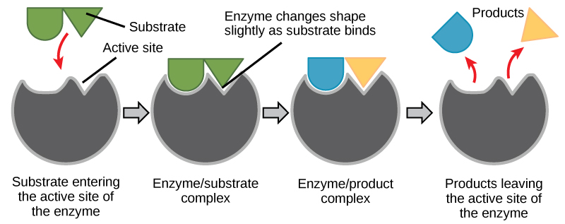how to make bioactive substrate