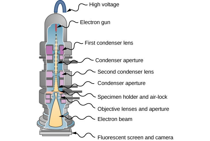 Picture shows the schematics of a transmission electron microscope. An electron gun generates electron beam that passes through two sets of condenser lens and condenser apertures prior to hitting the specimen. The transmitted electrons are projected on a fluorescent screen and the image is sent to a camera.