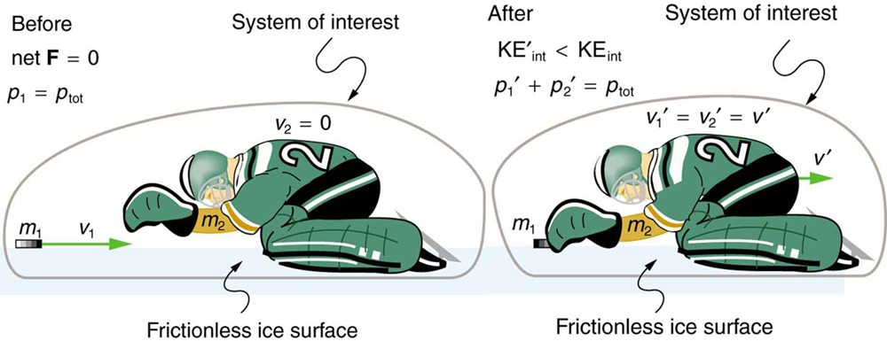 The first picture shows an ice hockey goal keeper of mass m 2 bent on his knees, turning to the left on a frictionless ice surface with zero velocity and a hockey puck of mass m 1 and velocity V 1 moving toward the right. The total momentum of the system is p 1 which is the momentum of the puck and the net force is zero. The second picture shows the goalie to catch the puck. The puck moves with velocity V 1prime and the goalie with velocity V 2 prime and their magnitudes are equal. The momentum of the puck is p 1 prime and the goalie is p 2 prime. The total momentum remains same as before collision. But the kinetic energy after collision is lesser than the kinetic energy before collision. This is true for inelastic collisions.