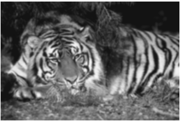 Figure 11(a) (tiger.png)
