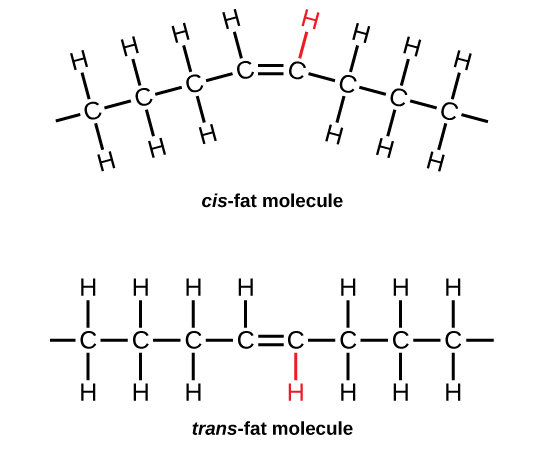 Derived copy of Organic Compounds Essential to Human Functioning
