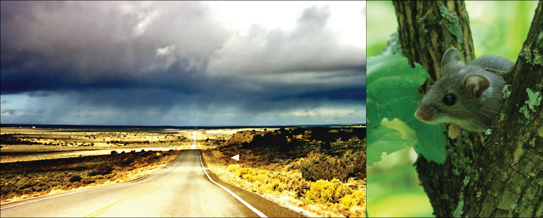 Left photo shows a long, straight highway in the middle of a desert. Right photo shows a mouse.