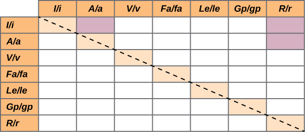 The table shows the combinations of characteristics for which Mendel reported results.