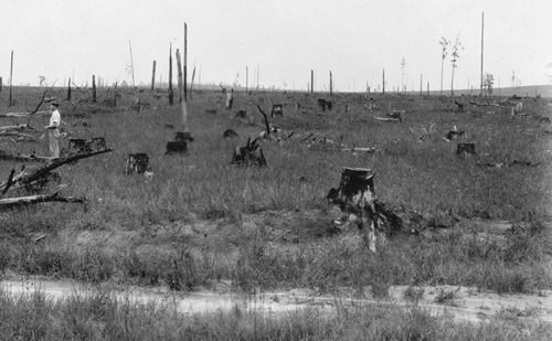 Clear Cutting, Louisiana, 1930