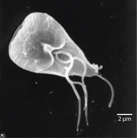 Groups of Protists   Boundless Biology