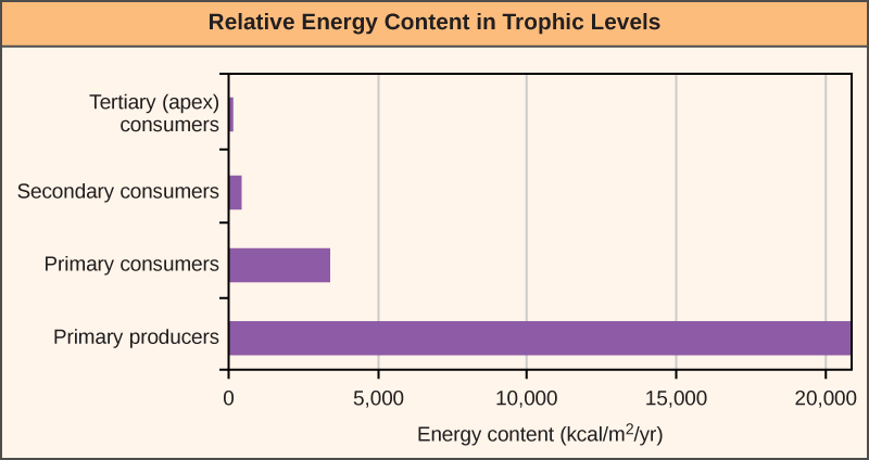 Graph shows energy content in different trophic levels. The energy content of primary producers is over 20,000 kilocalories per meter squared per year. The energy content of primary consumers is much smaller, about 3,400 kilocalories per meter squared per year. The energy content of secondary consumers is 383 kilocalories per meter squared per year, and the energy content of tertiary consumers is only 21 kilocalories per meter squared per year.