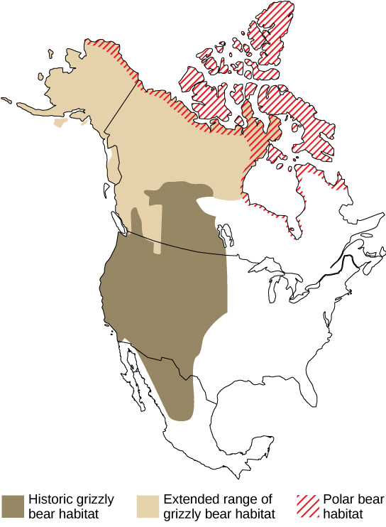 Map A compares the historic and current ranges of grizzly bears with the range of polar bears. Historically, grizzly bear habitat extended from Mexico through the western United States and into the mid-latitudes of Canada. But in recent years this range has expanded northward, to the northern tip of Canada and throughout Alaska. This range now overlaps with the polar bear range in the northern extremes of Alaska in Canada.