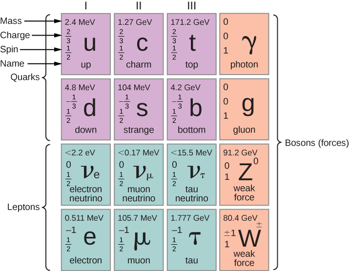 This is a table with four rows and four columns. The first three cells in the first and second rows are labeled quarks. The first three cells in the third and fourth rows are labeled leptons. The last column is labeled bosons, forces. Each cell has the name of a particle, it's symbol, mass, charge, and spin. In the first row, these values, in that order, are: cell one: up, u, 2.4 MeV, 2 by 3, 1 by 2; cell two: charm, c, 1.27 GeV, 2 by 3, 1 by 2; cell three, top, t, 171.2 GeV, 2 by 3, 1 by 2; cell four: photon, gamma, 0, 0, 1. In row two, these values, in that order, are: cell one: down, d, 4.8 MeV, minus 1 by 3, 1 by 2; cell two: strange, s, 104 MeV, minus 1 by 3, 1 by 2; cell three: bottom, b, 4.2 GeV, minus 1 by 3, 1 by 2; cell four: gluon, 0, 0, 1. In row three, these values, in that order, are: cell one: electron neutrino, v subscript e, less than 2.2 eV, 0, 1 by 2; cell two: muon neutrino, v subscript mu, less than 0.17 MeV, 0, 1 by 2; cell three: tau neutrino, v subscript tau, less than 15.5 MeV, 0, 1 by 2; cell four: weak force, z raised to 0, 91.2 GeV, 0,1. In row four, these values, in that order, are: cell one: electron, e, 0.511 MeV, minus 1, 1 by 2; cell two: muon, mu, 105.7 MeV, minus 1, 1 by 2; cell three: tau, tau, 1.777 GeV, minus 1, 1 by 2; weak force, w plus minus, 80.4 GeV,  plus minus 1, 1.