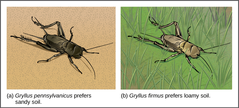 Speciation can occur when two populations occupy different habitats
