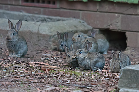 Seven rabbits in front of a brick building.