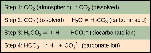 In step 1, atmospheric carbon dioxide dissolves in water. In step 2 dissolve carbon dioxide (CO2) reacts with water (H2O) to form carbonic acid (H2CO3). In step 3, carbonic acid dissociates into a proton (H plus) and a bicarbonate ion (HCO3 minus). In step 4 the bicarbonate ion dissociates into another proton and a carbonate ion (CO3 minus two).