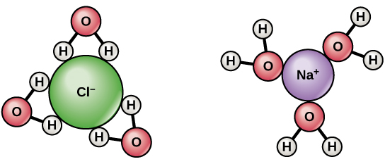 When sodium chloride dissolves in water, the positively charged sodium ions interact with the oxygen of water, and the negatively charged chlorine ions interact with the hydrogen of water.