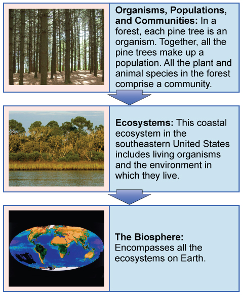 """A flow chart of three boxes shows the hierarchy of living organisms. The top box is labeled """"Organisms, populations, and communities"""" and has a photograph of tall trees in a forest. The second box is labeled """"ecosystems"""" and has a photograph of a body of water, behind which is a stand of tall grasses developing into more dense vegetation and trees as distance from the water increases. The third box is labeled """"the biosphere"""" and shows a drawing of planet Earth."""
