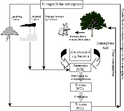 Global Cycles The Nitrogen Cycle - Grade 10