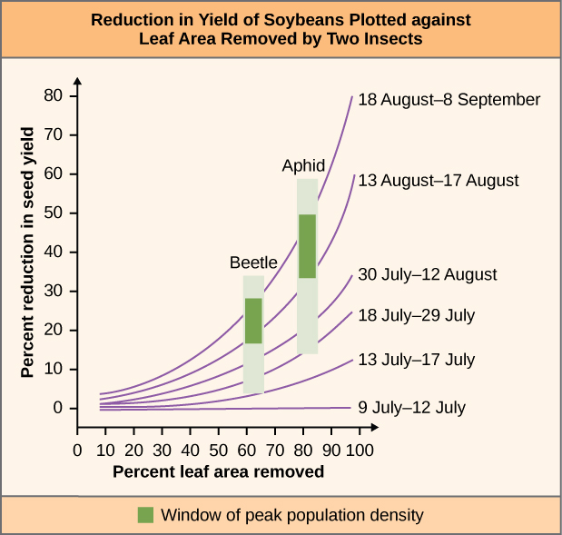 "Chart is called ""Reduction in Yield of Soybeans Plotted against Leaf Area Removed by Two Insects"". The vertical axis of the chart is labeled ""Percent reduction in seed yield"" and ranges from 0 to 80 in increments of 10. The horizontal axis is labeled ""Percent leaf area removed"". Six sets of date lines cross the graph. 9 July-12 July runs from 10 percent leaf area removed and 0 percent reduction in seed yield to 100 percent leaf area removed while staying at 0 percent reduction in seed yield. 13 July- 17 July runs from 10 leaf area, 0 seed yield to 100 leaf area, 10 seed yield. 18 July-29 July runs from 10 leaf area, 0 seed yield to 100 leaf area, 25 seed yield. 30 July – 12 August runs from 10 leaf area, 0 seed yield to 100 leaf area, 35 seed yield. 13 August-17 August runs from 10 leaf area, 0 seed yield to 100 leaf area 60 seed yield. 18 August – 8 September runs from 10 leaf area, 0 seed yield to 100 leaf area, 80 seed yield. A bar labeled beetle runs from between 60-70% leaf area removed and from between 5-35% reduction in seed yield with the window of peak population density lying between 20-30%. A bar labeled aphid runs from between 80-90% leaf area removed and from between 15-60% reduction in seed yield with the window of peak population density lying between 35-50%."