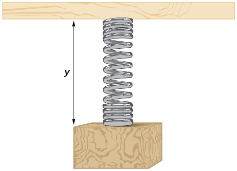 An illustration of a spring with length y.