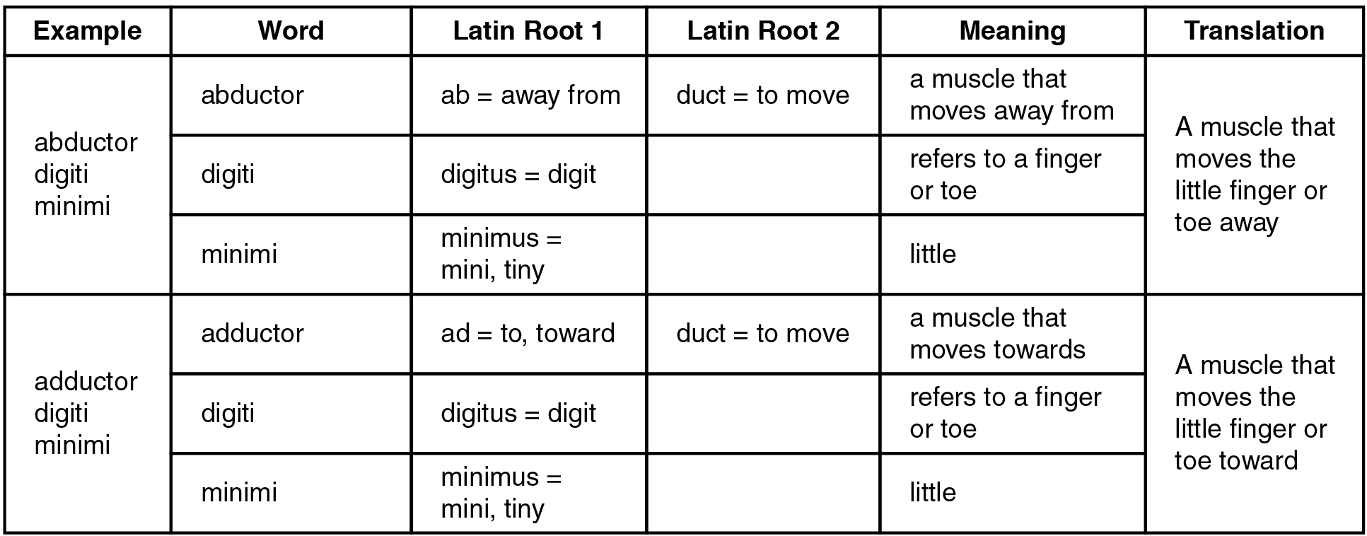 Worksheets Latin Roots Worksheet worksheet what is a root word example wosenly free naming skeletal muscles openstax cnx this table shows two