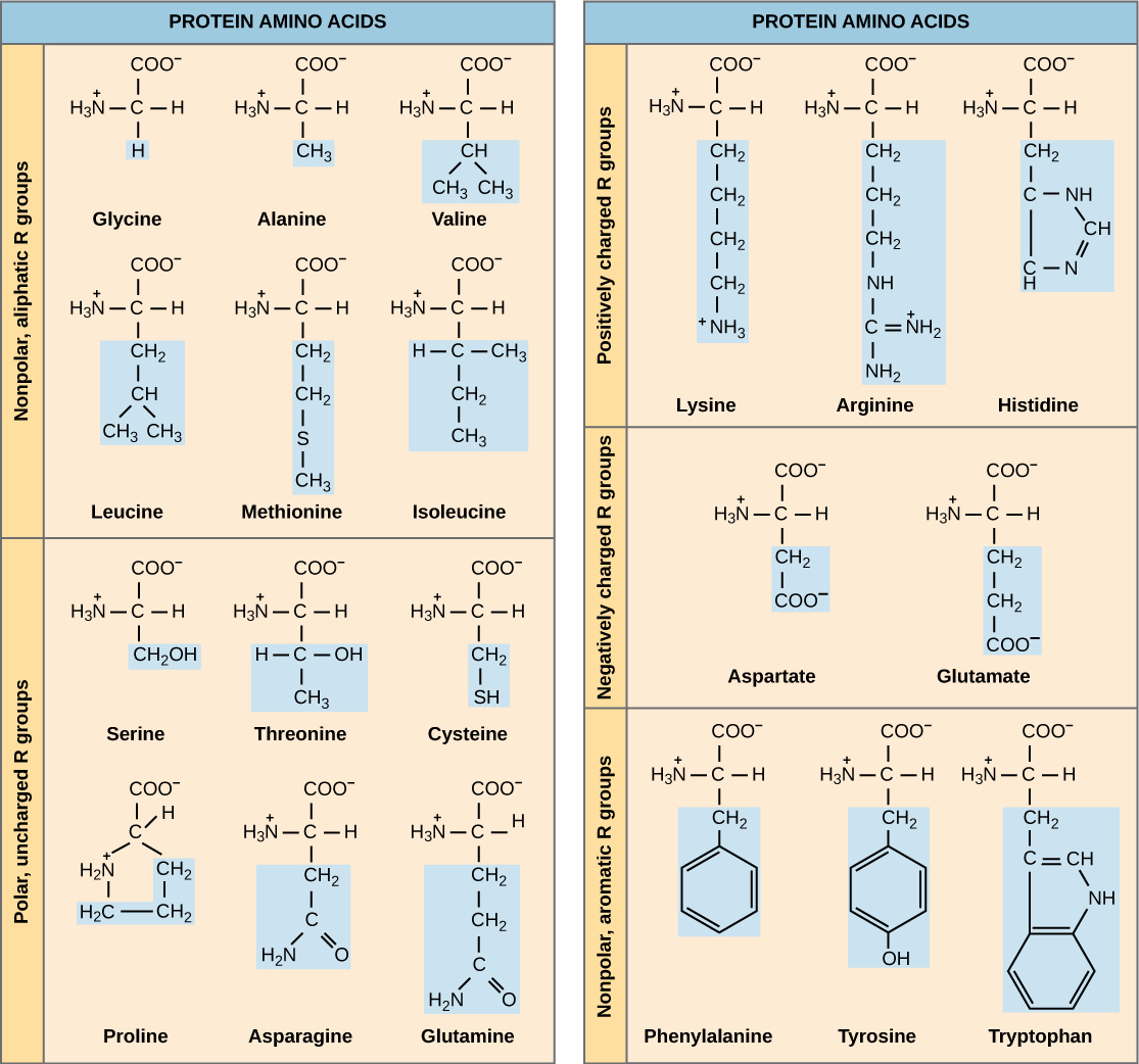 Amino Acid Side Chain Chemical Properties