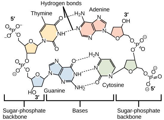 Classes Of Organic Compounds Boundless Chemistry
