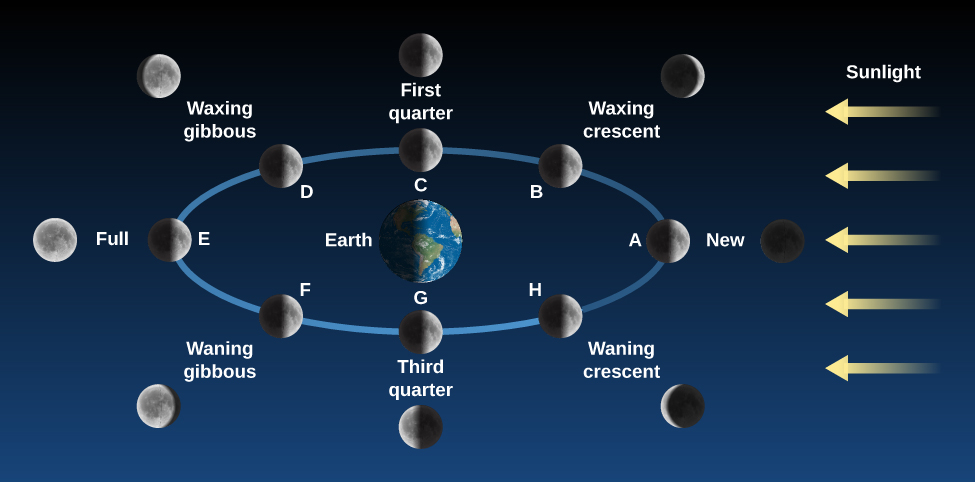 """Phases of the Moon. The Earth is drawn as the center of a blue ellipse representing the Moon's orbit. At right, yellow arrows labeled """"Sunlight"""" point toward the Earth and Moon. The Moon is drawn in eight positions along its orbit, along with an illustration of the Moon as it would appear to an observer on Earth. At position """"A"""" at far right, the Moon is between the Earth and Sun. At that point the Moon is """"New"""". At position """"B"""" at upper right, the observer would see a """"Waxing crescent"""". At position """"C"""" at top center, the observer would see """"First quarter"""". At position """"D"""" at upper left, the observer would see the """"Waxing gibbous"""" phase. At position """"E"""", the Earth is now between the Sun and Moon, and an observer would see a """"Full"""" Moon. At position """"F"""" at lower left, the observer would see the """"Waning gibbous"""" phase. At position """"G"""" at bottom center, an observer would see the """"Third quarter"""" Moon. Finally, at position """"H"""" at lower right, the observer would see the """"Waning crescent"""" Moon."""