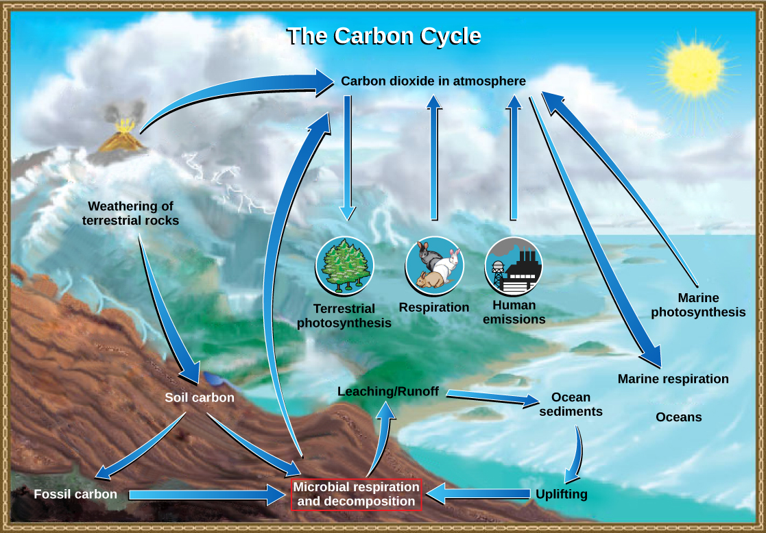 Biogeochemical Cycles | Boundless Biology
