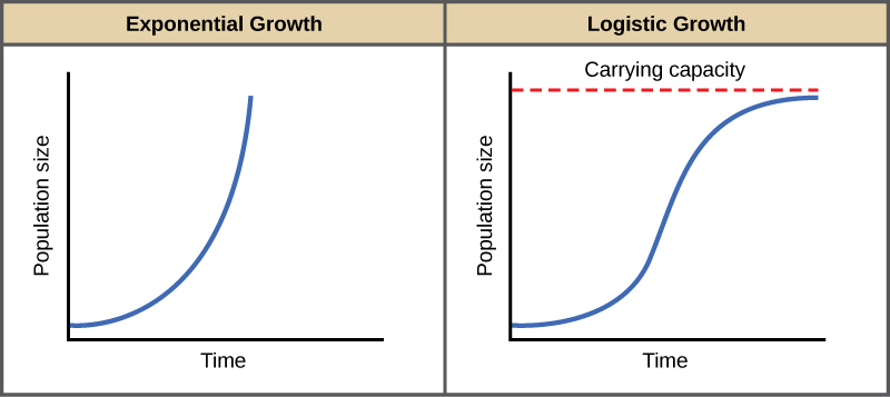 When resources are unlimited, populations exhibit exponential growth, resulting in a J-shaped curve. When resources are limited, populations exhibit logistic growth.