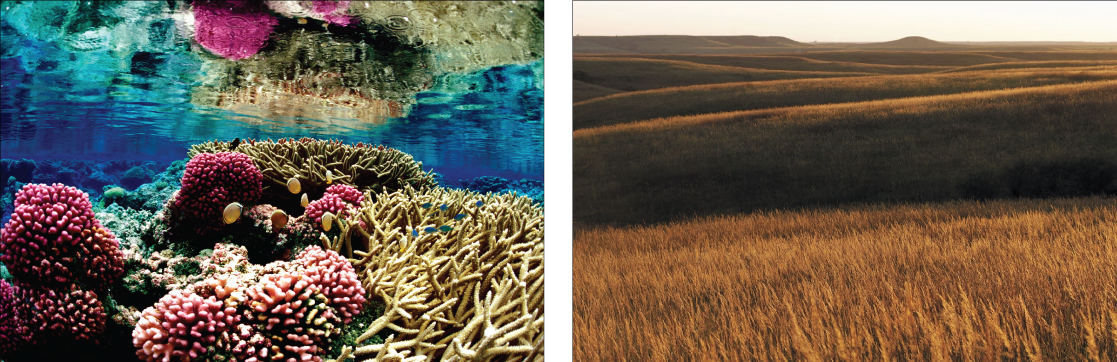 Photo on the left shows a coral reef. Some of the coral is lobe-shaped, with bumpy pink protrusions, and the other coral has long, slender beige branches. Fish swim among the coral. Photo on the right is a rolling prairie with nothing but tall brown grass as far as the eye can see.