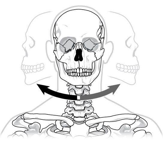 Illustration shows a human skull twisting back and forth on the neck in a pivot-like motion.