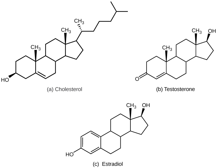 steroid lipid examples