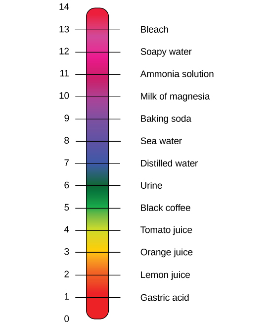 The pH scale, which ranges from zero to 14, sits next to a bar with the colors of the rainbow. The pH of common substances are given. These include gastric acid with a pH around one, lemon juice with a pH around two, orange juice with a pH around three, tomato juice with a pH around four, black coffee with a pH around five, urine with a pH around six, distilled water with a pH around seven, sea water with a pH around eight, baking soda with a pH around nine, milk of magnesia with a pH around ten, ammonia solution with a pH around 11, soapy water with a pH around 12, and bleach with a pH around 13.