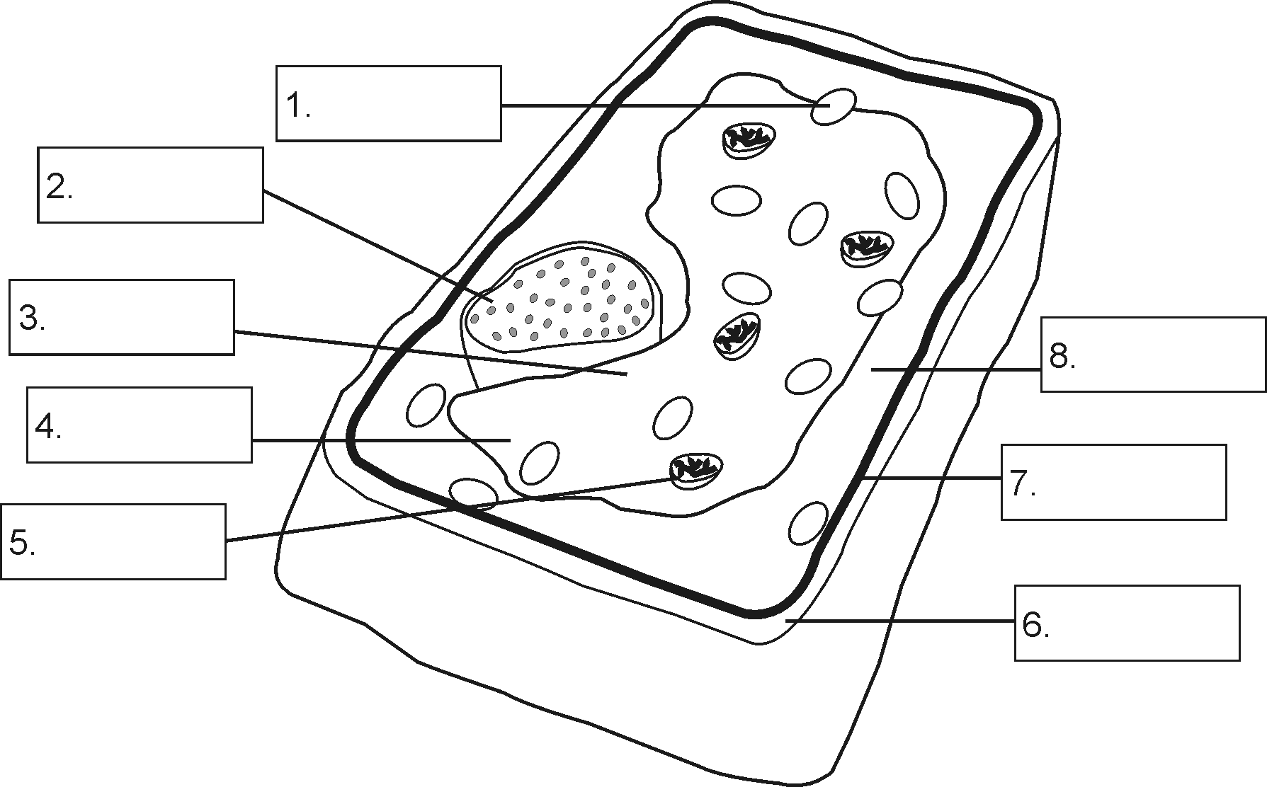 Plant Cell Diagram For Kids No Labels Plant Cell - Wiring Diagram Name