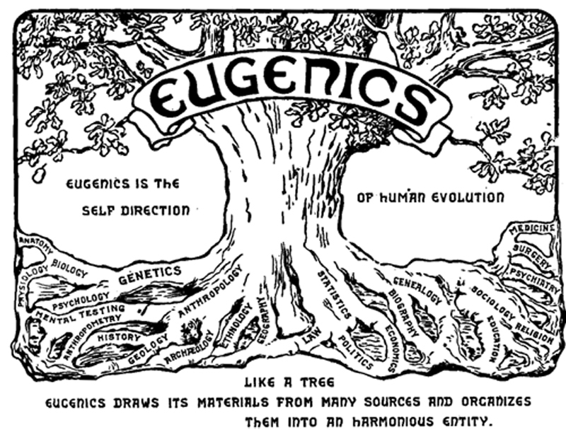 """Illustration shows a tree with words such as genetics, statistics, medicine, economics, and genealogy associated with the roots. The word eugenics is emblazoned across the upper trunk. To the side of the tree is the text """"Eugenics is the self-direction of human evolution."""""""
