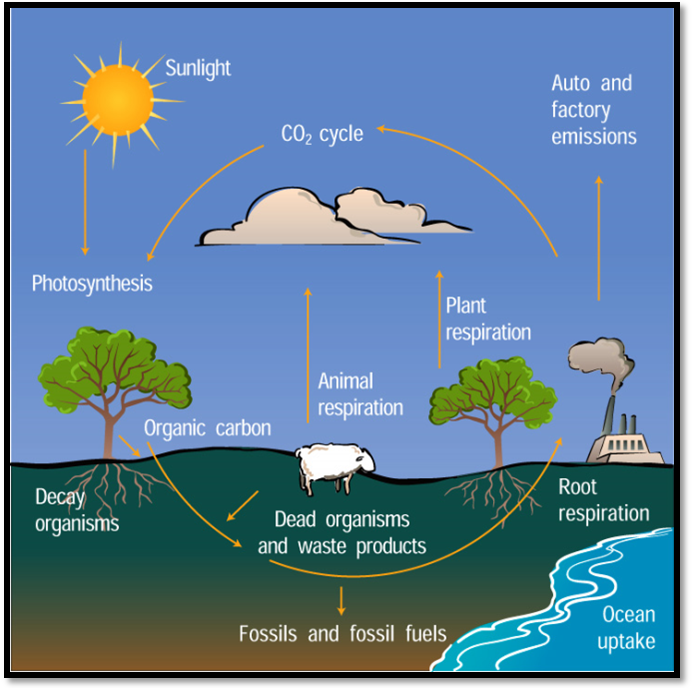 Carbon Cycle For Kids Worksheet Rice air curriculum - lesson 3 ...