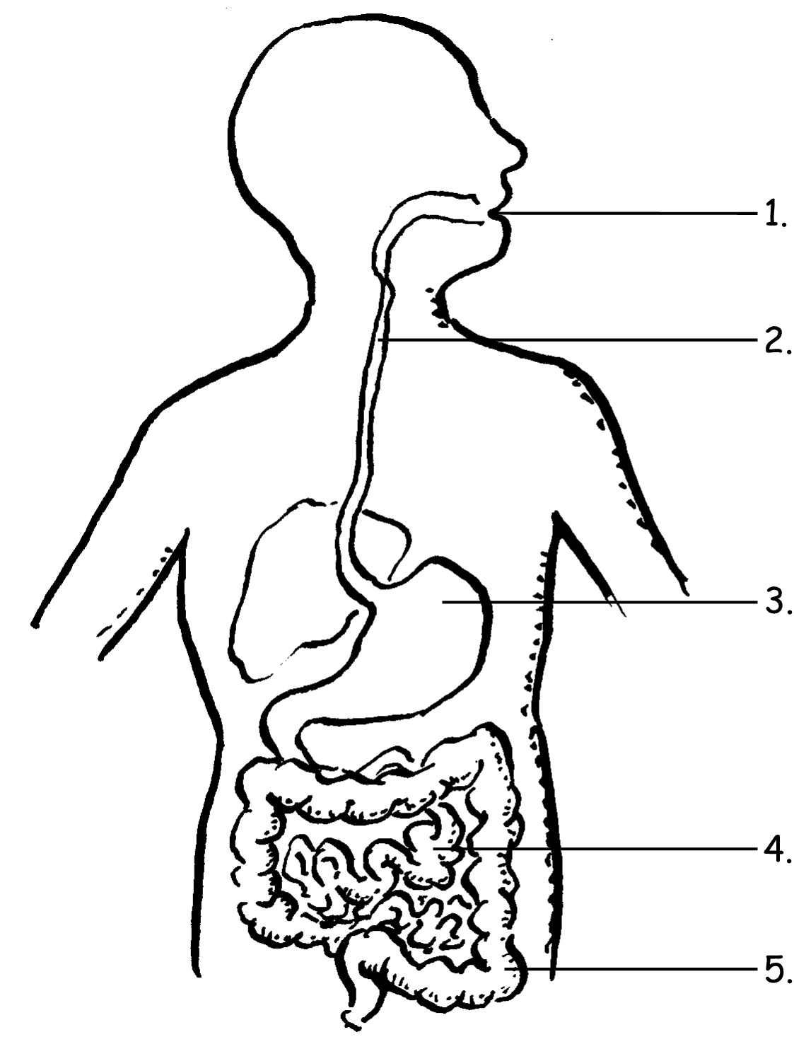 102 the digestive system lessons tes teach the digestive system natural sciences grade 4 openstax cnx ccuart Image collections