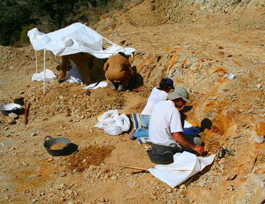 Photo depicts scientist digging fossils out of the dirt.