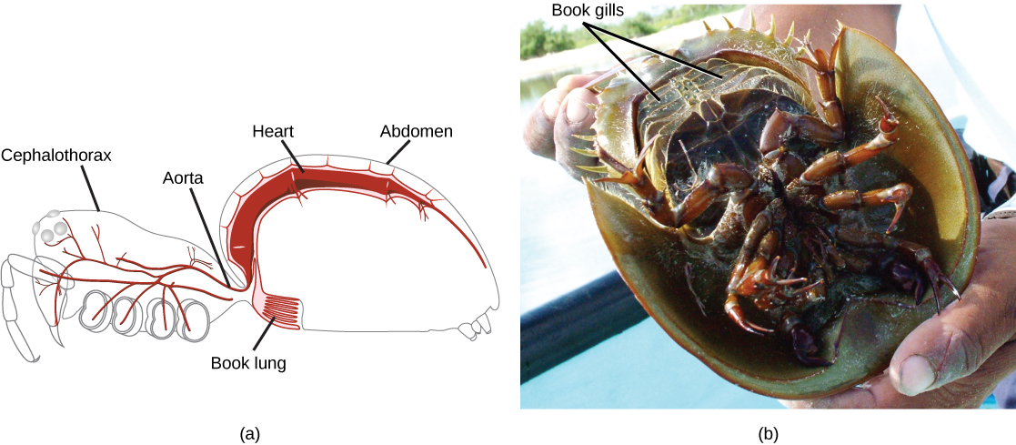 Part A is a diagram of a  Spider Internal Diagram