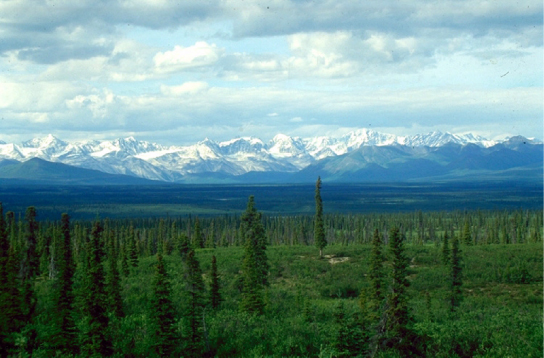 Photo shows a boreal forest with a uniform low layer of plants and tall conifers scattered throughout the landscape. The snowcapped mountains of the Alaska Range are in the background.