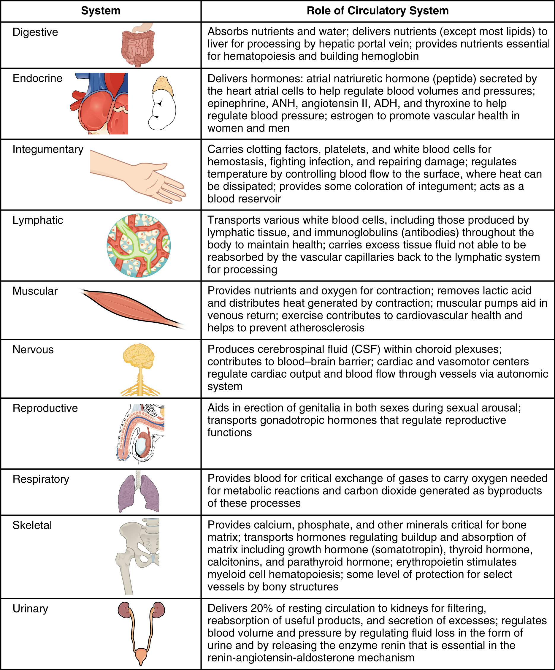 Body Systems Chart Seroton Ponderresearch Co