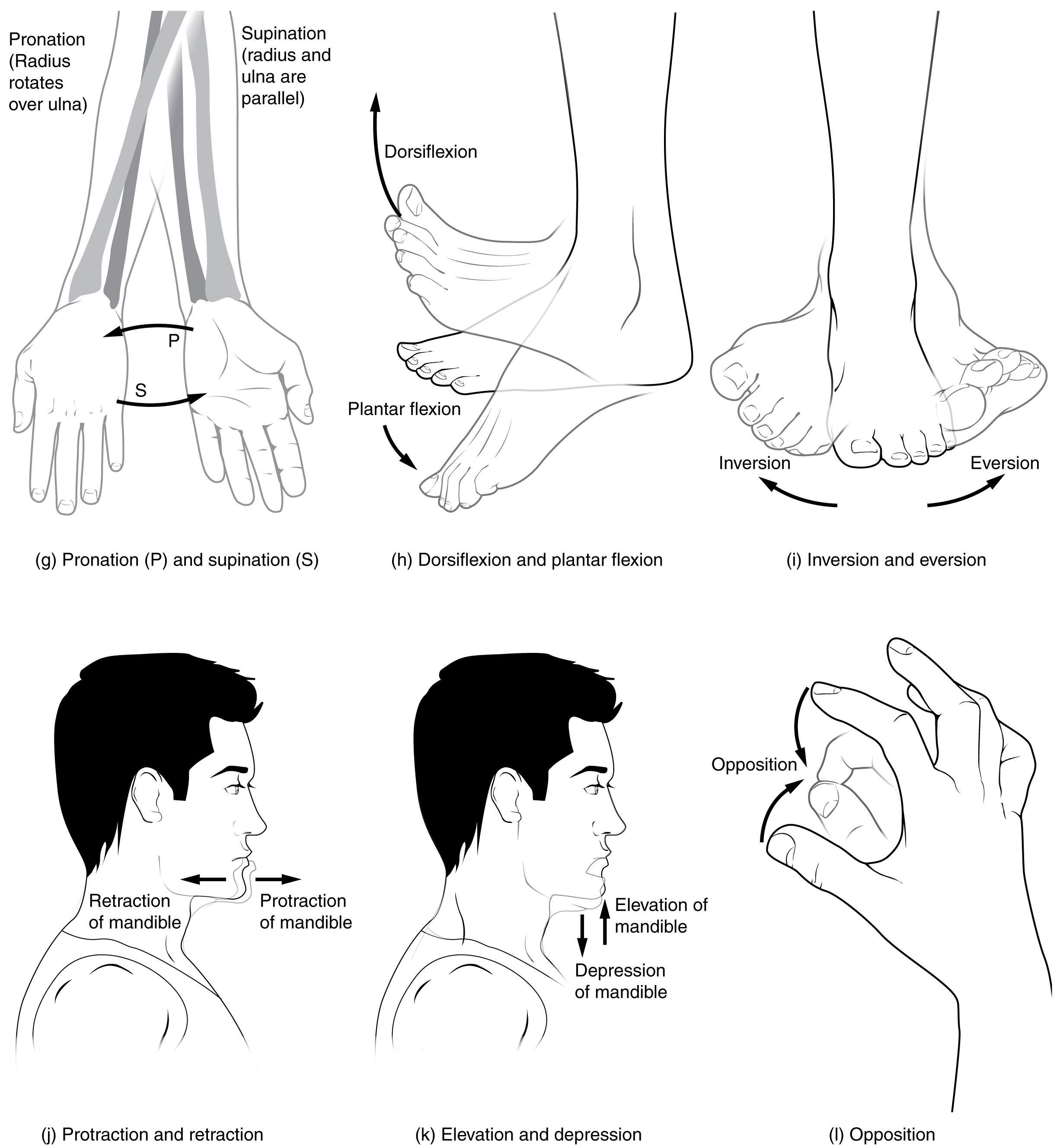 types of body movements this multi part image shows different types of movements that are possible by different joints