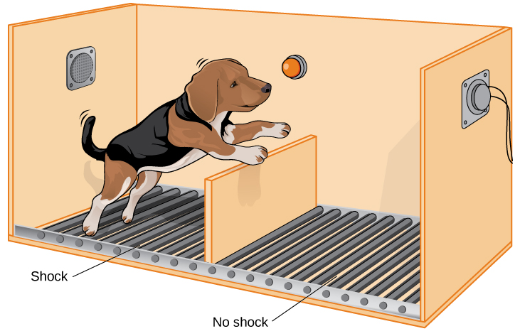 An illustration shows a dog about to jump over a partition separating an area of a floor delivering shocks from an area that doesn't deliver shocks.