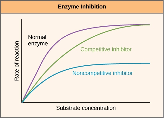 activator enzyme definition