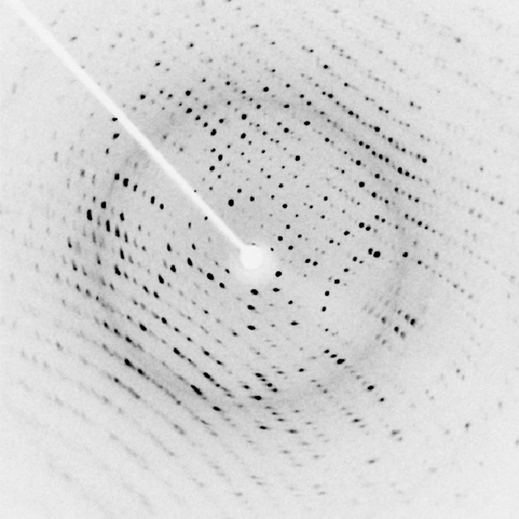 An x ray diffraction image of a protein. The image shows an array of small black dots, arranged in slightly curved rows, on a white background. A white arm extends from the top left to the center of the image, where there is a small white disk. This white disk is the shadow of the beam block, which blocks the part of the incident x ray beam that was not diffracted by the crystal.