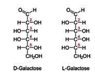 L Galactose Sugars D and L ...