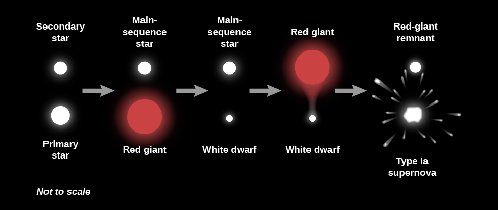 """Illustration of the Evolution of a Binary System. From left to right the """"Primary star"""" is at bottom drawn as a large white circle. The """"Secondary star"""" is at top as a smaller white circle. A grey arrow points to the right to the next phase. The primary has evolved into a """"Red giant"""", drawn as a large red circle, and the secondary remains a """"Main-sequence star"""". A grey arrow points to the right to the next phase. The primary has evolved into a """"White dwarf"""", drawn as a white dot, and the secondary remains a """"Main-sequence star"""". A grey arrow points to the right to the next phase. The primary remains a """"White dwarf"""" while the secondary has evolved a """"Red giant"""", drawn as a large red circle with material flowing toward the white dwarf. A grey arrow points to the right to the final phase. The primary has exploded as a """"Type Ia supernova"""", drawn as a white blob with debris streaming outward, and the secondary has evolved into a """"Red-giant remnant""""."""