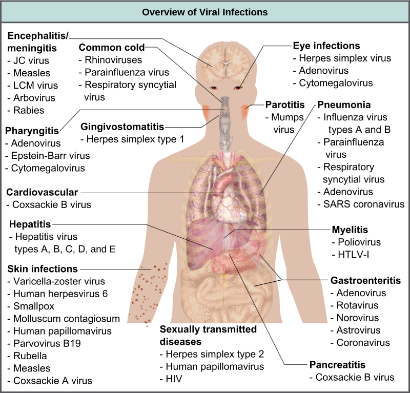 Prevention and Treatment of Viral Infections | Biology II
