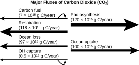 A figure labeled Major Fluxes of Carbon Dioxide (C O 2). There are four arrows pointing left and two arrows pointing right. The first arrow pointing left is labeled Carbon fuel (7 x 10^15 g C/year). The second arrow pointing left is labeled Respiration (118 x 10^15 g C/year). The third arrow pointing left is labeled Ocean loss (97 x 10^15 g C/year)/ The fourth arrow pointing left is labeled O H capture (0.5 x 10^15 g C/year). The first arrow pointing right is labeled Photosynthesis (120 x 10^15 g C/year). The second arrow pointing left is labeled Ocean uptake (100 x 10^15 g C/year).