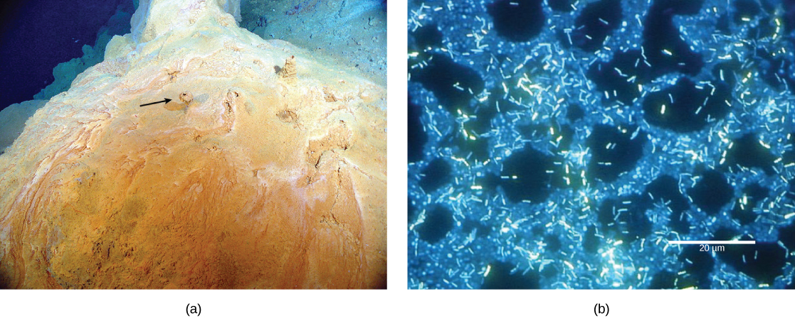 The part a photo shows a reddish-yellow mound with small chimneys growing out of it. Part b micrograph shows rod-shaped bacteria about two microns long swimming over a thicker mat of bacteria.