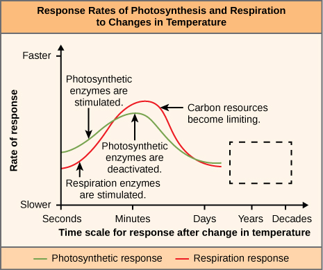 "Chart is titled ""Response Rates of Photosynthesis and Respiration to Changes in Temperature"". The vertical axis of the chart is labeled Rate of Response and it is measured from Slower to Faster. The horizontal axis of the chart is labeled Time scale for response after change in temperature and is measured from seconds, minutes, days, years, and decades. The Photosynthetic line starts about 1/3 up from the Slower bound of the Rate of response axis. A label at this point reads ""Photosynthetic enzymes are stimulated. It peaks at Minutes at about half way between slower and faster. A label at the lines peak states ""Photosynthetic enzymes are deactivated. The line then falls to about its starting point at days. The Respiration response line starts 1/5 of the way up from slower. A label at this point states ""resperation enzymes are stimulated"". It peaks just past the minutes line at 2/3 of the way to Faster. A label at this point states ""carbon resources become limited"". The line then drops to just below the Photosynthetic response line at the Days mark. From the Days to Decade labels on the vertical axis, a dashed line rectangle takes up the space where the lines would go if they continued."